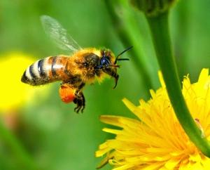 Bee%20Venom2