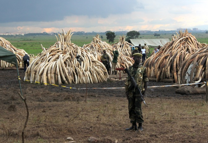 Ivory Burn: A day before Kenyan history